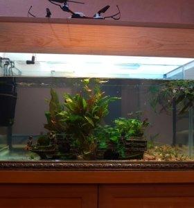 Срочно,новый аквариум с зеркалом