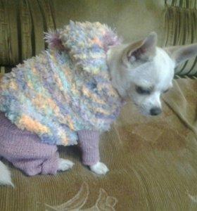 Зимние и осенние комбинезончики для собак и кошек