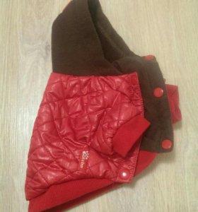 Курточка для тойчика
