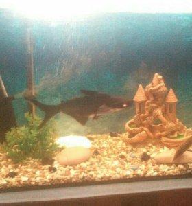 рыбки и аквариум