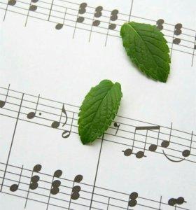 Уроки вокала, сольфеджио, теории музыки.