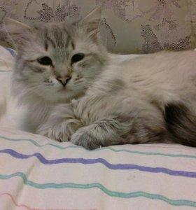 Вязка с котом невско маскарадный