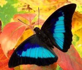 Тропические Живые Бабочки из Непал Белянка