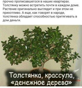 ,,Денежное дерево,,