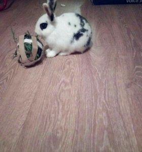 Милый декоративный кролик .