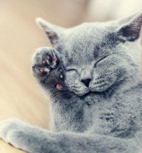 Корм для счастливых кошек
