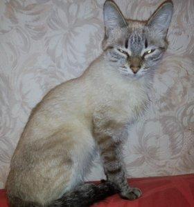 Кошечка 5 месяцев