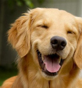 Корм для счастливых собак