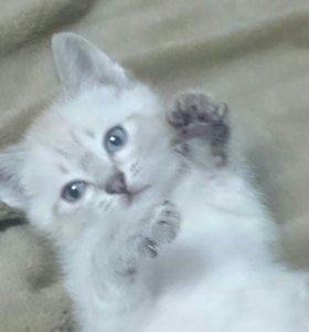 Отдам котят в добрые руки, две девочки и один мал