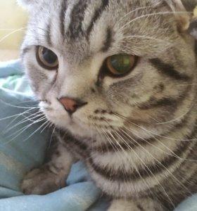Вязка Кота за котёнка) породистый