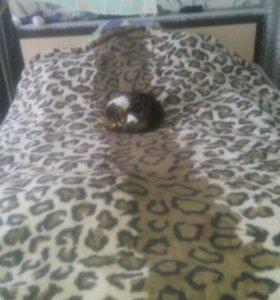 Кровать двухспалка с матрацем.