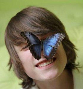 Экзотические Живые Бабочки из Чили Брюквенница