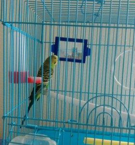 Попугай, девочка красавица.