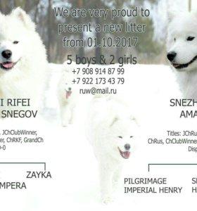 Самоедские медвежата
