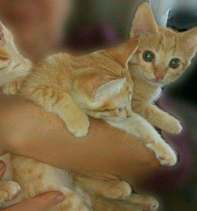 Котята, отдам в добрые руки