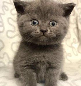 Плюшевые котята