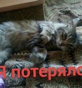 Потерялся кот!