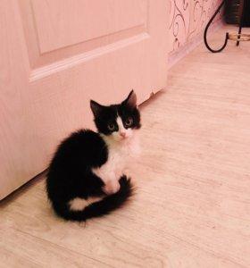 Дарю котенка