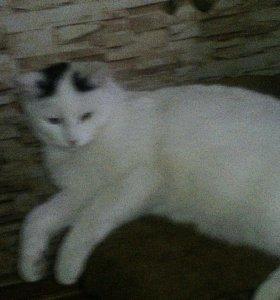 Кот, 8 месяцев