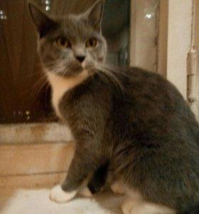 отдам кошку в хорошие руки)