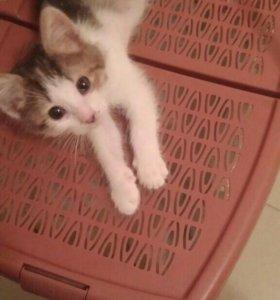 Котенок.в добрые руки