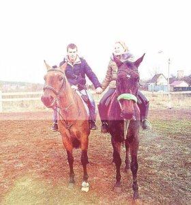 Обучение , верховая езда