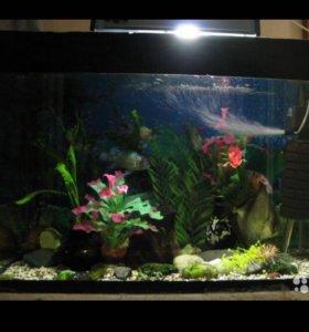 Продаётся аквариум 40 литров с рыбками