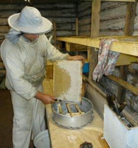 Натуральный мед 🍯 из Башкирии, гречишный