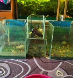 Продам аквариумы большой 500 маленький 250