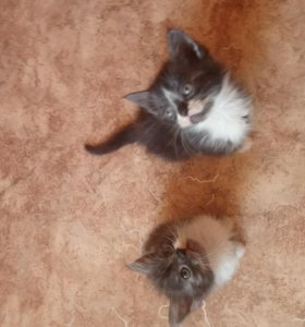 Милые котята ждут своих хозяев