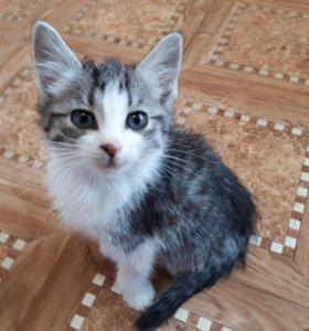 Котёнок-девочка с голубыми глазами