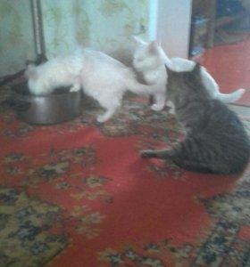От дам кошек