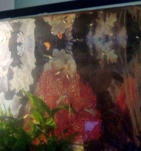 Рыбки Гуппи за коробку сока или других рыбок
