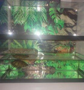 красноухая черепаха с аквариумом