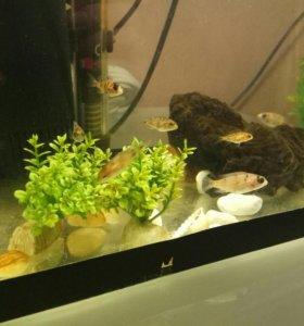 Аквариумные рыбки (мальки)
