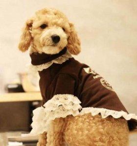 Кофточка для собачки