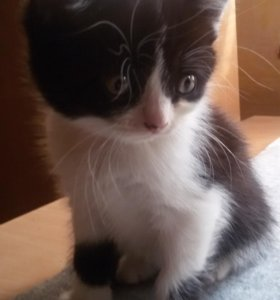 Кот Сёма