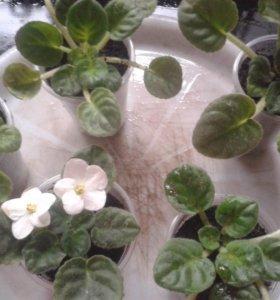 Фиалки и другие цветы