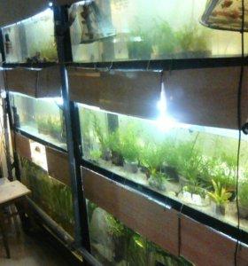 Аквриумные рыбки оптом
