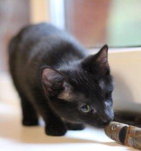Котенок Черничка черный Чернушка-ласкушка