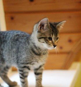 Рыська котенок - моторчик