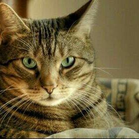 Предержка кошек