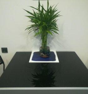 Стол стеклянный раздвижной
