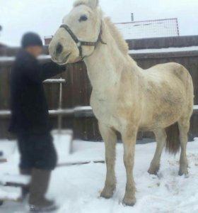 Лошадь и Жеребушка!