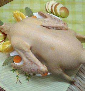 Мясо домашнего гуся цена за 1 кг