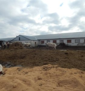 Продаётся действующая молочная ферма на 14 га
