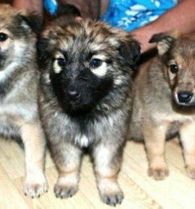 3 щенка - 2 девочки и 1 мальчик