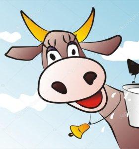 Коровье молоко домашнее