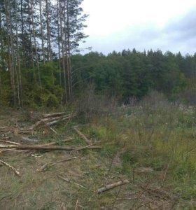 Продам дрова дуб берёза