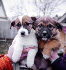 Стерелизованные щенки девочки